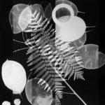 Meris Angioletti, D-76, Fossil, 2017-2018, gelatin silver photograms transferred on photo paper, 45X60 cm. Courtesy Otto Zoo. Ph. Ugo Dalla Porta