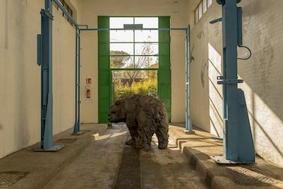 Animal house, ex Magazzini Atac, roma